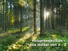 Holzarten - Lexikon: Jetzt informieren!