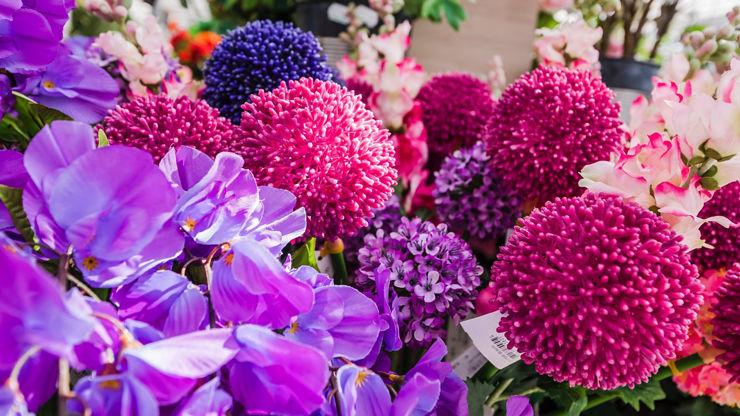 pflanzen_floraland_1920px.jpg